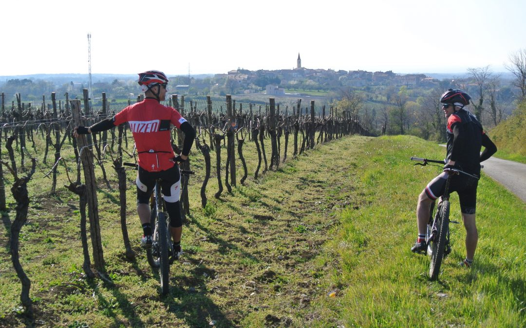 Cycle and Wine – active vacation you always dreamed of