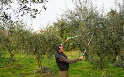 Anche quest'anno l'olio extra vergine d'oliva San Rocco tra i migliori oli del mondo al Concorso Internazionale Flos Olei 2016